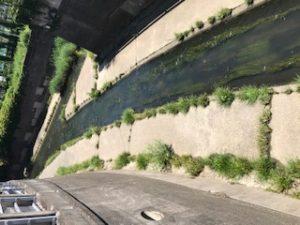 神田川と善福寺川の合流